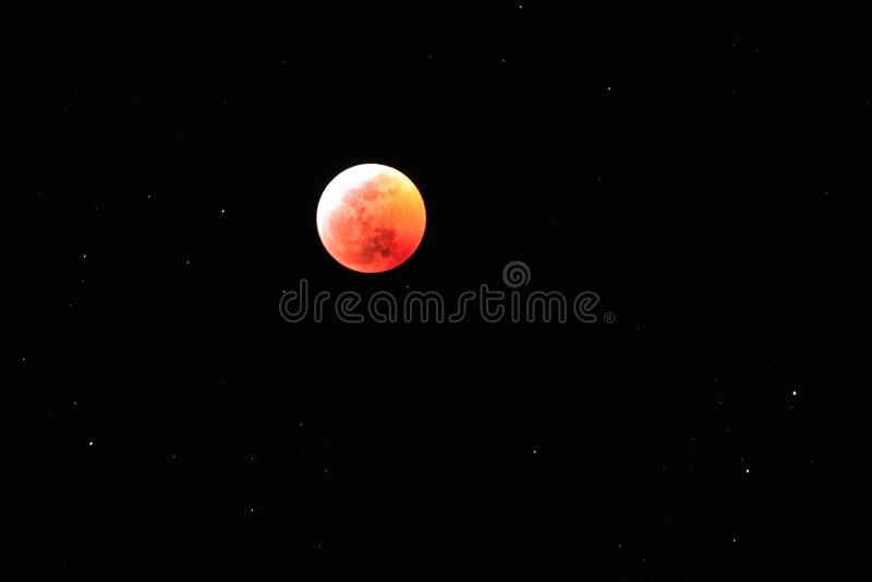 Sammanlagd vargsupermoon för månförmörkelse royaltyfri bild