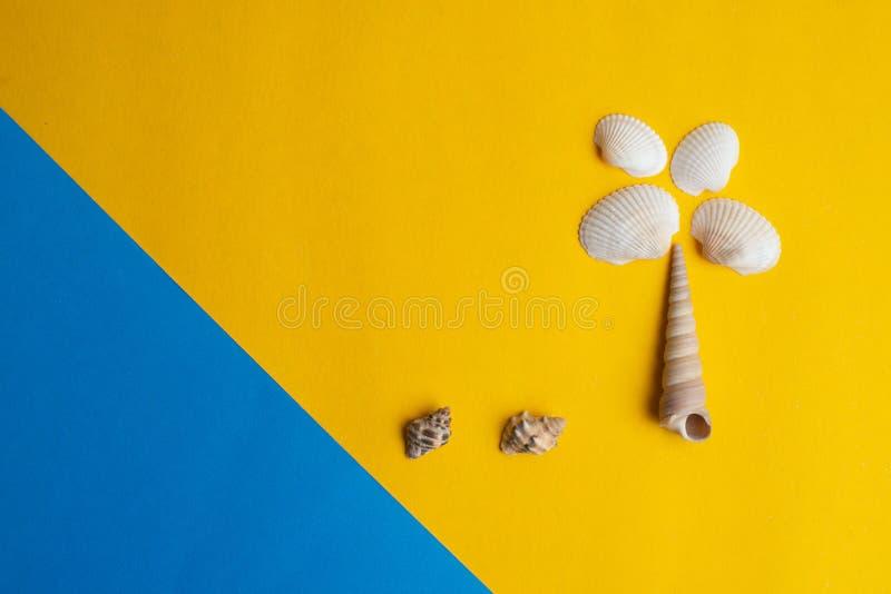 Sammansättning av exotiska havsskal på en guling och en blå bakgrund Sommar-, havs- och palmträdbegrepp Top besk?dar royaltyfria bilder