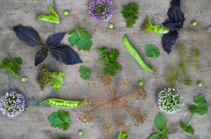 Sammansättning av grönsaker och örter arkivfoto