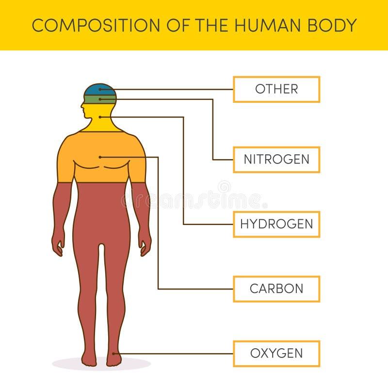Sammansättning av människokroppen royaltyfri illustrationer