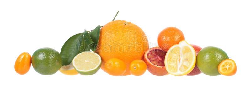 Sammansättning av olika citrusfrukter som isoleras på vit bakgrund royaltyfri bild
