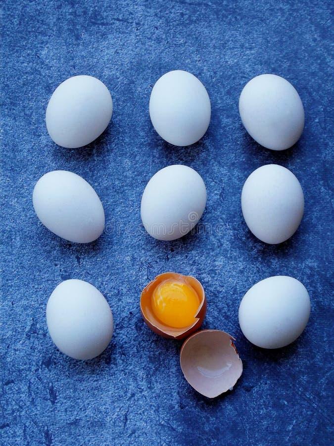 Sammansättning av vita ägg för ny lantgård arkivfoto