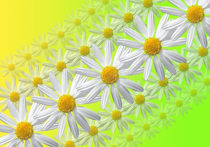 sammansättning blommar linjärt arkivfoto