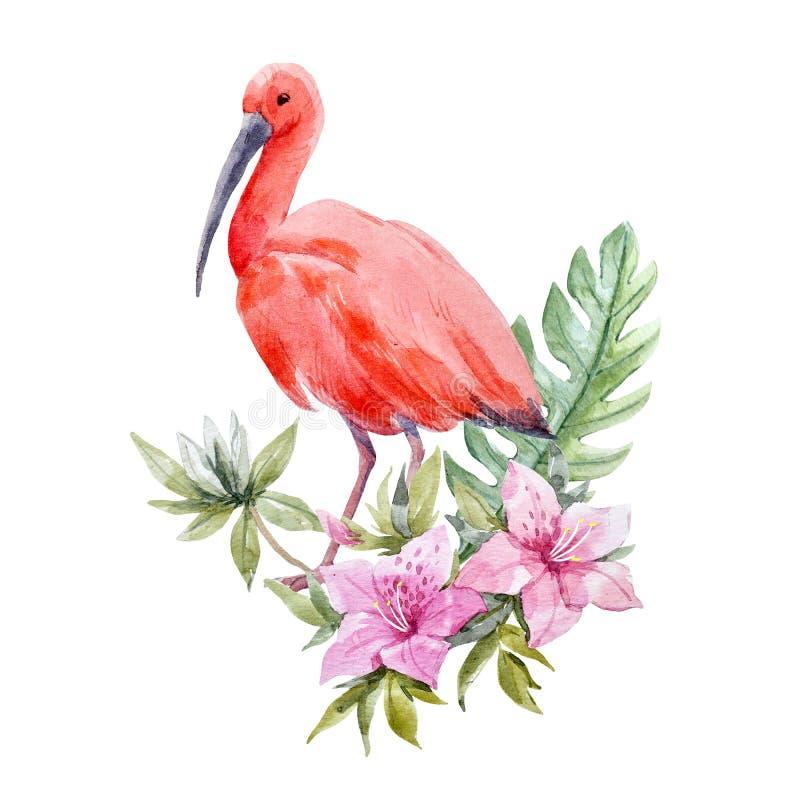 Sammansättning för vattenfärgibisfågel royaltyfri illustrationer