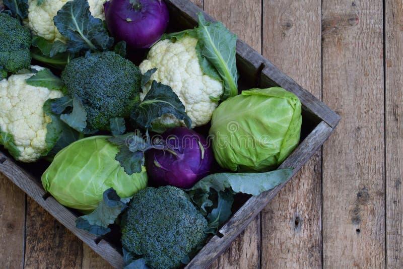 Sammansättning från olika variationer av kål på träbakgrund Blomkål kålrabbi, broccoli, vit head kål organiskt royaltyfri fotografi