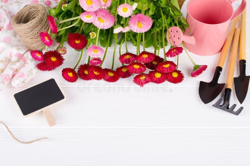 Sammansättning med första tusenskönablommor för att plantera och att arbeta i trädgården hjälpmedelutrymme för text arkivfoton