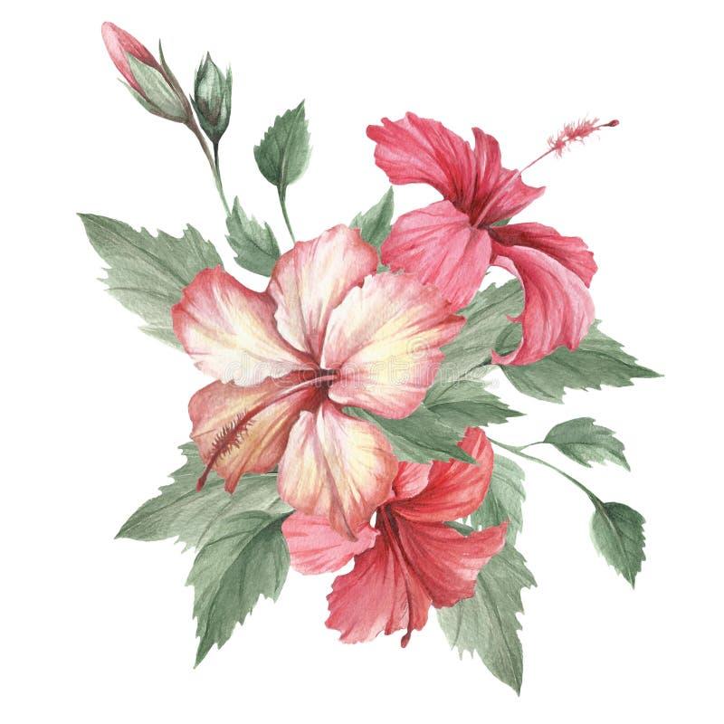 Sammansättning med hibiskusen Illustration för handattraktionvattenfärg vektor illustrationer