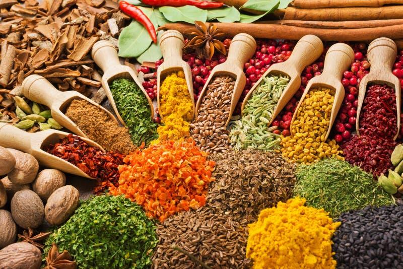 Sammansättning med olika kryddor och örter arkivfoto