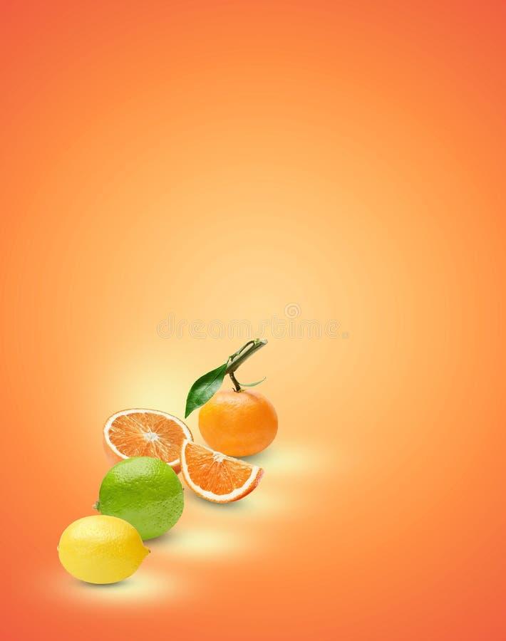 Sammansättningen av olika citrusfrukter på en orange bakgrund Bearbeta för konst av skuggor och viktig placera text royaltyfria bilder