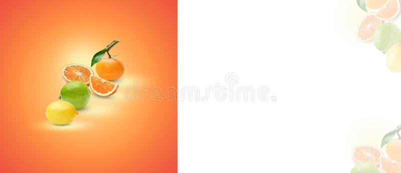 Sammansättningen av olika citrusfrukter på en orange bakgrund Bearbeta för konst av skuggor och viktig placera text arkivfoton