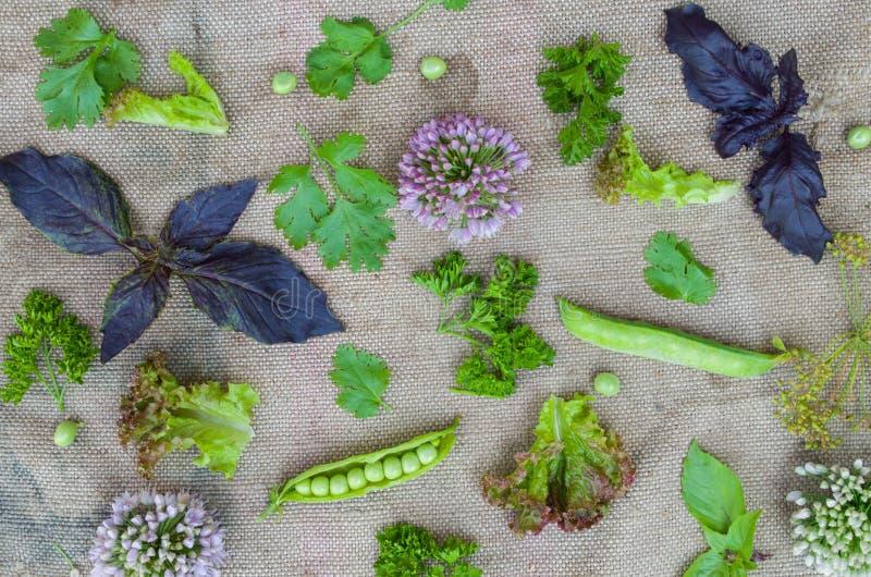 Sammansättningen av sidorna, gräsen och växterna royaltyfri fotografi