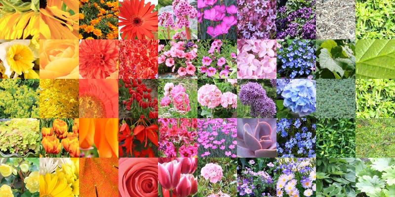 Sammansatt collage för färgdiagram av en stor variation av blommor och royaltyfri bild