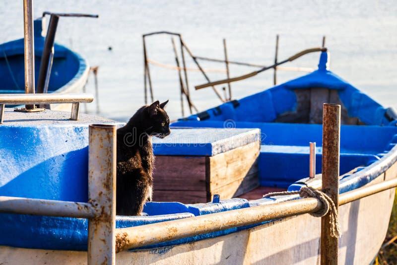 Sammanträde för den svarta katten i ett fartyg drog upp på kust på en solig Oktober morgon på Ahtopol, Bulgarien royaltyfria bilder