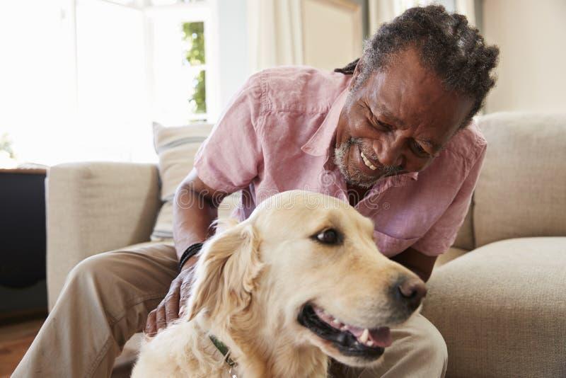Sammanträde för hög man på den Sofa At Home With Pet labrador royaltyfria foton