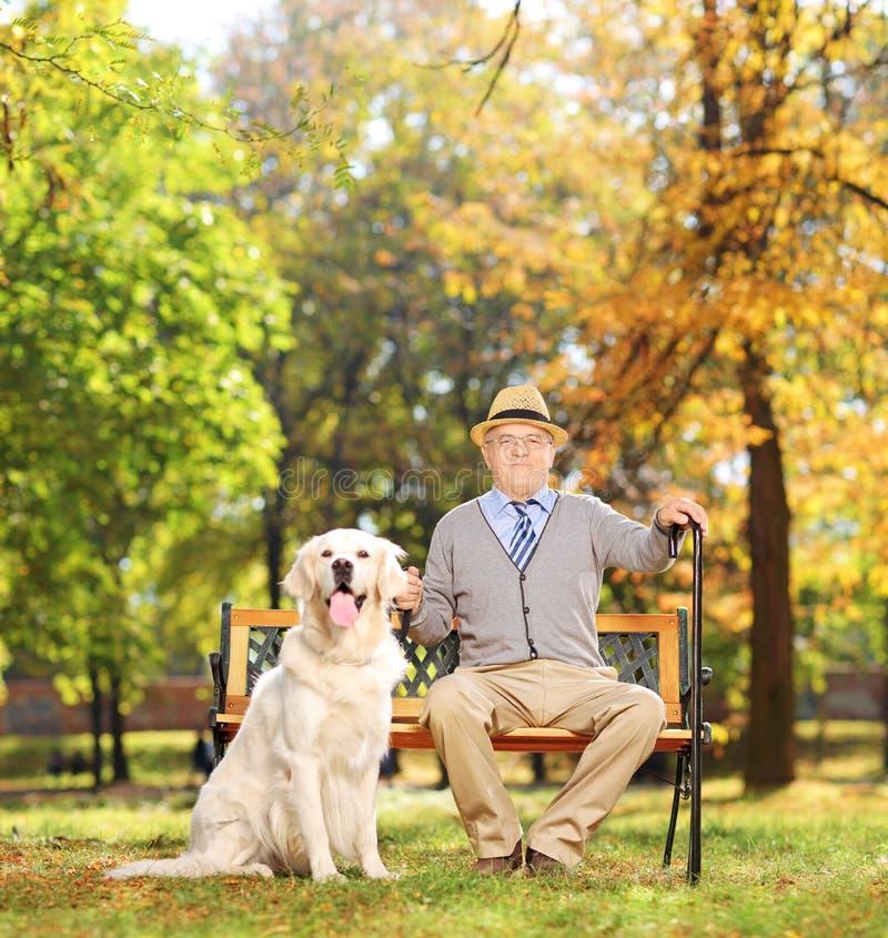 Sammanträde för hög man på en bänk med hans hund i en parkera royaltyfri foto