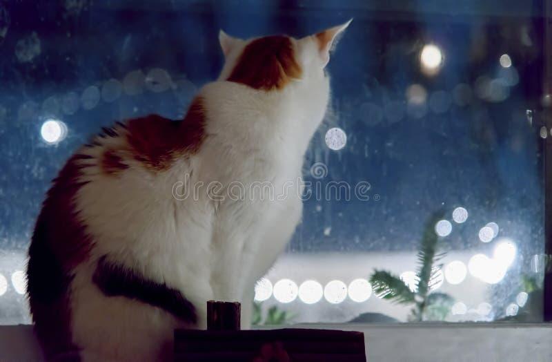 Sammanträde för kalikåkatt på fönsterfönsterbrädan som utanför ser på snö royaltyfria bilder