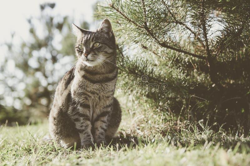 Sammanträde för strimmig kattkatt i trädgården vid trädet Katten är ett husdjur, familjen älskar henne Hon är härlig, lycklig och royaltyfria foton