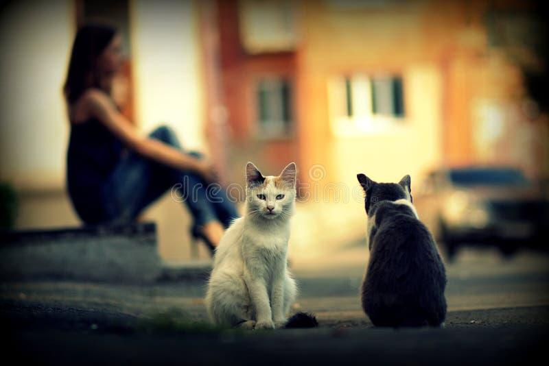 Två hemlösa katter royaltyfria bilder