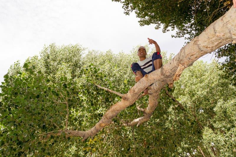 Sammanträde för ung man på ett träd royaltyfria foton