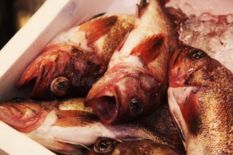 Sammantr?de f?r ny fisk p? till salu is arkivbilder