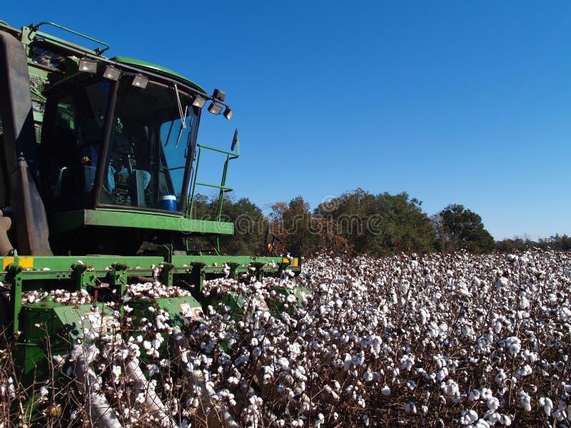 Sammeln-Baumwollnahaufnahme stockfotografie