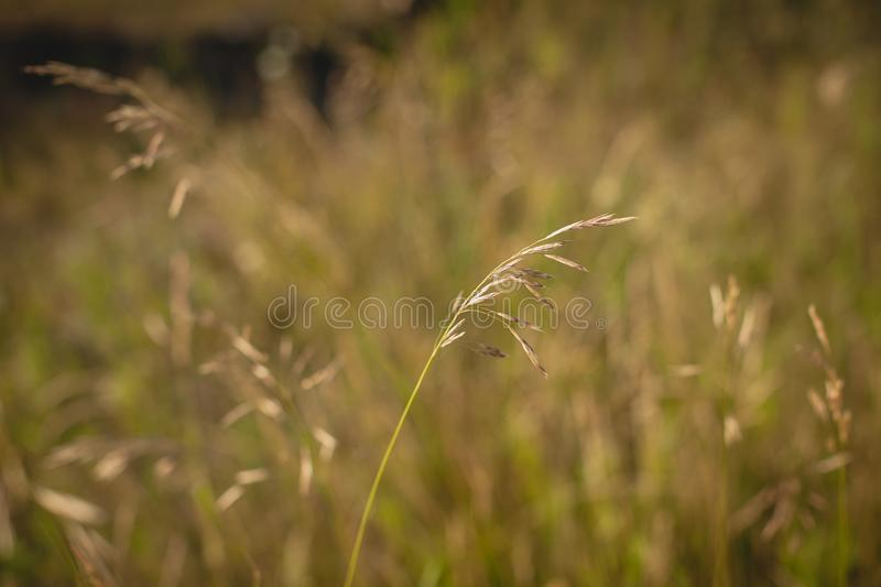 Sammer field of grass during sunset. Morning stock photography