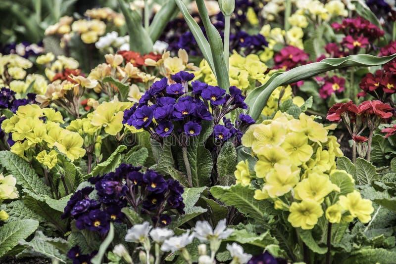 Sammlung bunte Blumen und grüne Blätter lizenzfreies stockfoto
