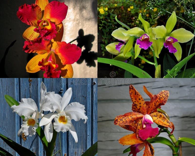Sammlung der exotischen Orchidee stockfotografie
