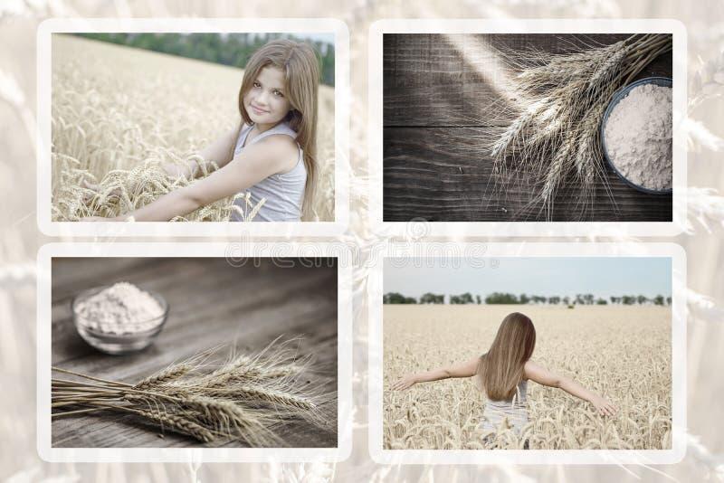 Sammlung des schönen kleinen Mädchens der Fotos in Weizenfeld amd Weizenähren und Mehl auf alter hölzerner rustikaler Tabelle stockfotografie
