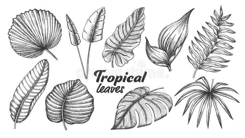 Sammlung des unterschiedlichen tropischen Blatt-Satz-Vektors stock abbildung