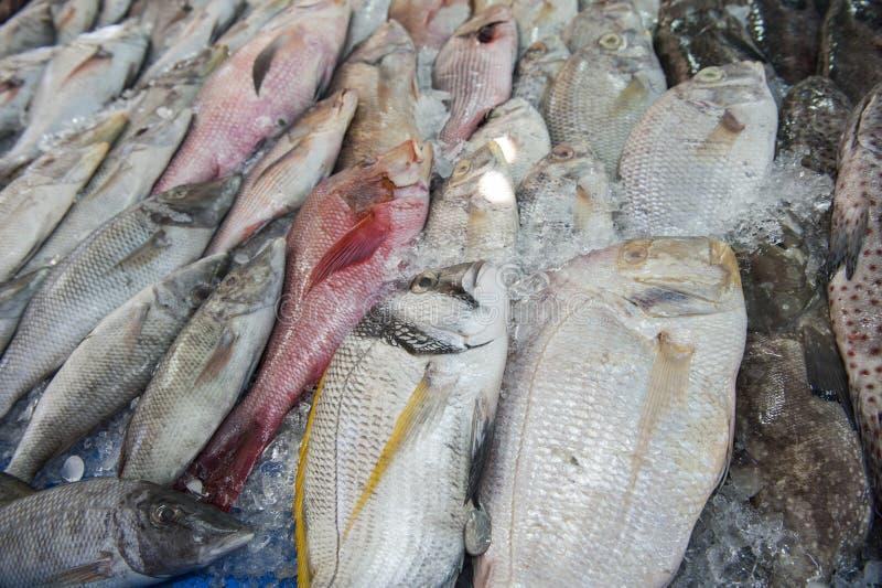 Sammlung Fische auf Anzeige im traditionellen Freilichtmarkt lizenzfreies stockbild