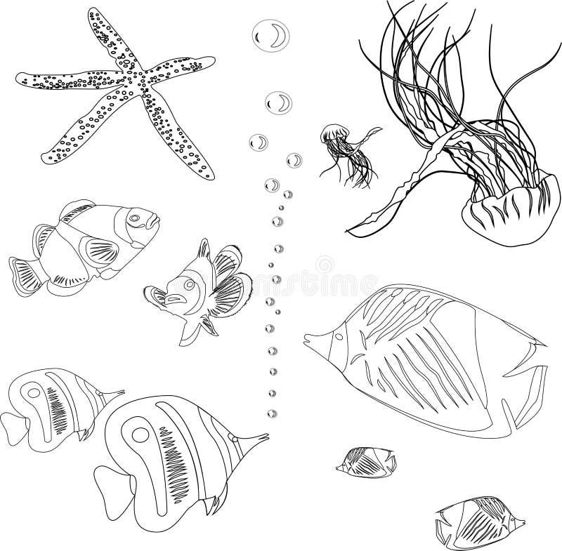 Sammlung Fische Vom Roten Meer. Quallen, Starfish. Malbuch Stock ...