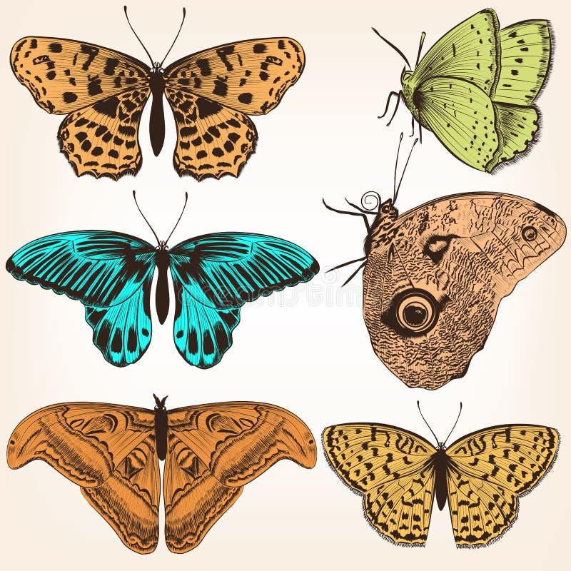 Sammlung Gezeichnete Schmetterlinge Des Vektors Hand Vektor ...