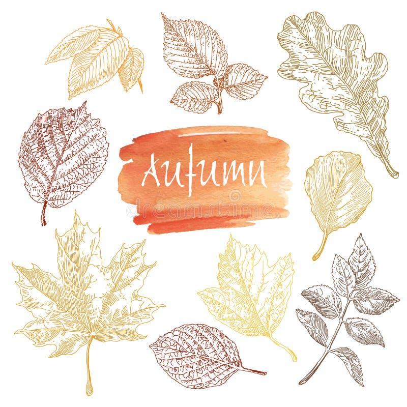 Sammlung in hohem Grade ausführliche Hand gezeichnete Blätter lokalisiert auf weißem Hintergrund stock abbildung