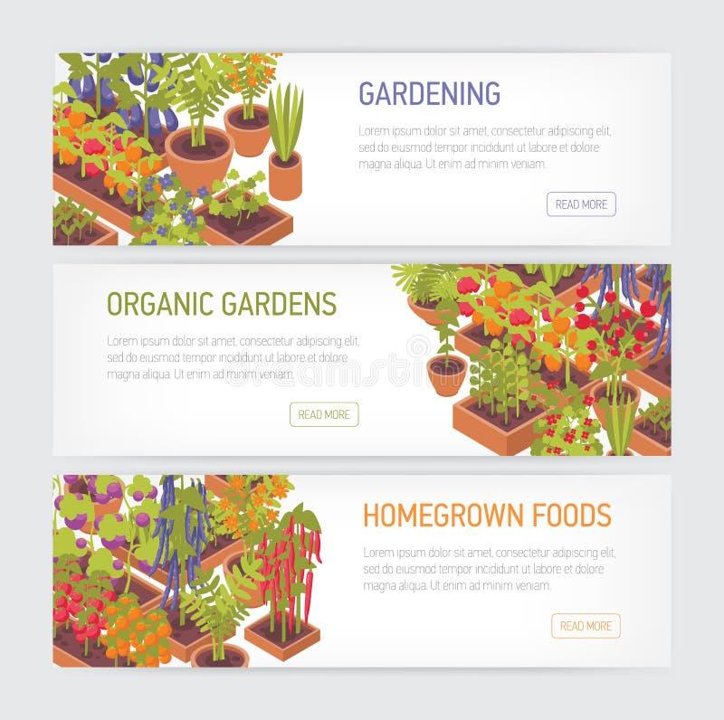 Sammlung horizontale Netzfahnen mit den Anlagen, die in den Töpfen und in den Pflanzern, Platz für Text auf weißem Hintergrund wa stock abbildung