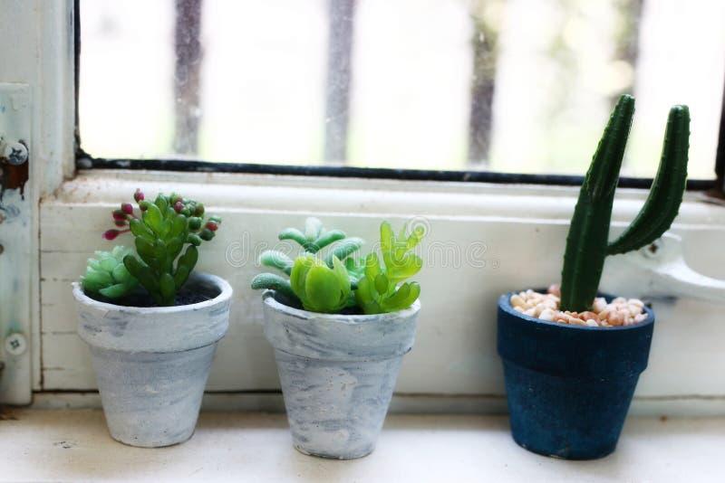 Sammlung Kaktus und saftige Anlagen in Töpfe Kaktus gepflanzt in den Töpfen im Regal gesetzt entlang die weißen hölzernen Fenster lizenzfreie stockfotografie