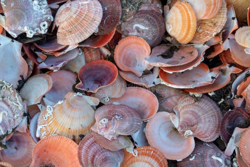 Sammlung leerer Muschelschalen am Strand stockbild
