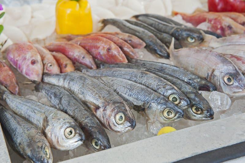 Sammlung Meeräschenfische auf Anzeige im Meeresfrüchterestaurant stockfotografie