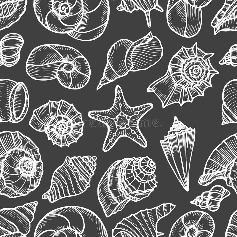 Sammlung Muscheln gezeichnet lizenzfreie abbildung