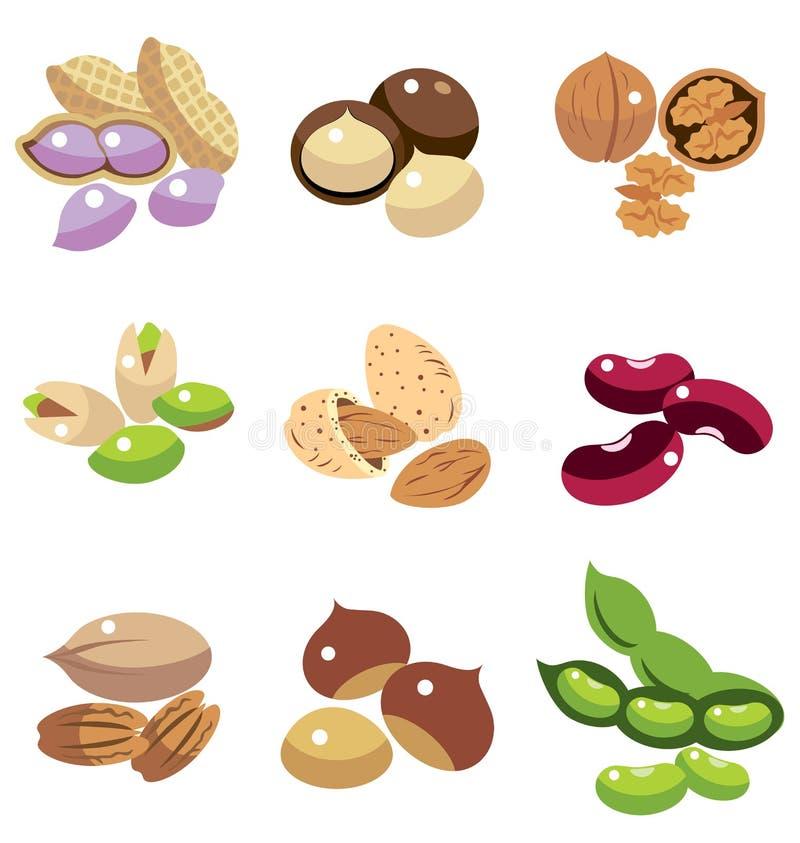 Sammlung Nüsse und Bohnen vektor abbildung