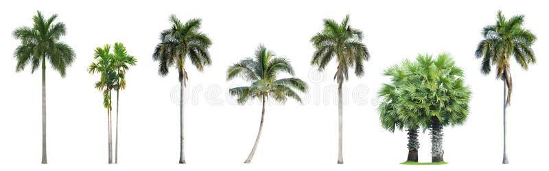 Sammlung Palmen lokalisiert auf Weiß stockbild