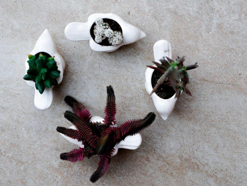 Sammlung saftige Anlagen, die auf weißem Vogel gepflanzt wurden, formte Topfansicht von oben stockfotos