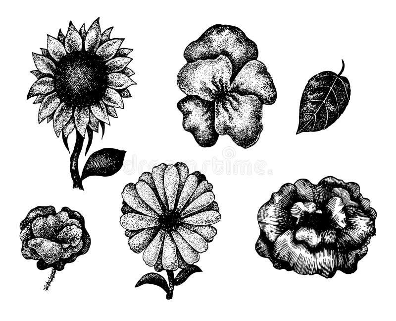 Sammlung Schwarzweiss-Hand Gezeichnete Blumen Vektor Abbildung ...