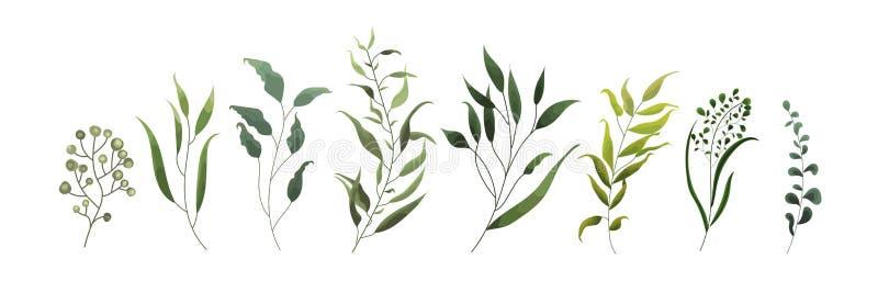 Sammlung tropische Blätter der Grünblattbetriebswaldkräuter lizenzfreie abbildung