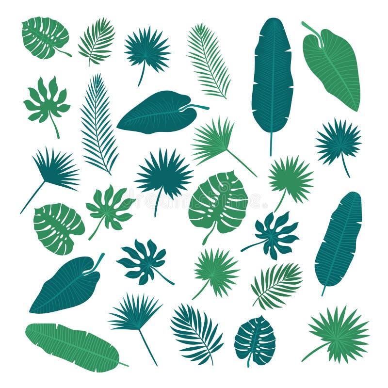 Sammlung tropische Blätter Naturelemente für Ihr Design vektor abbildung