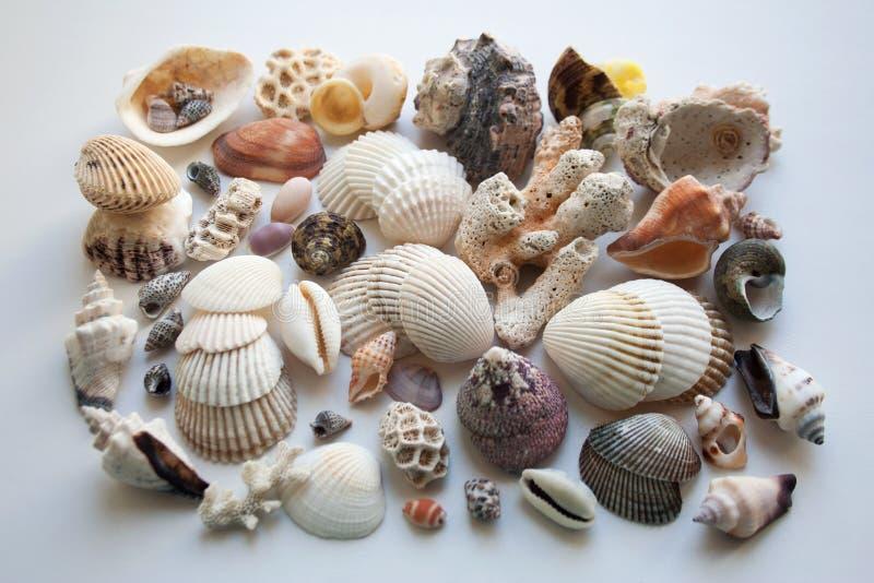 Sammlung verschiedene Muscheln und Korallen von der thailändischen Küste lizenzfreies stockfoto