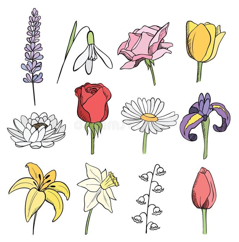 Sammlung vieler unterschiedliche Blumen Farb vektor abbildung