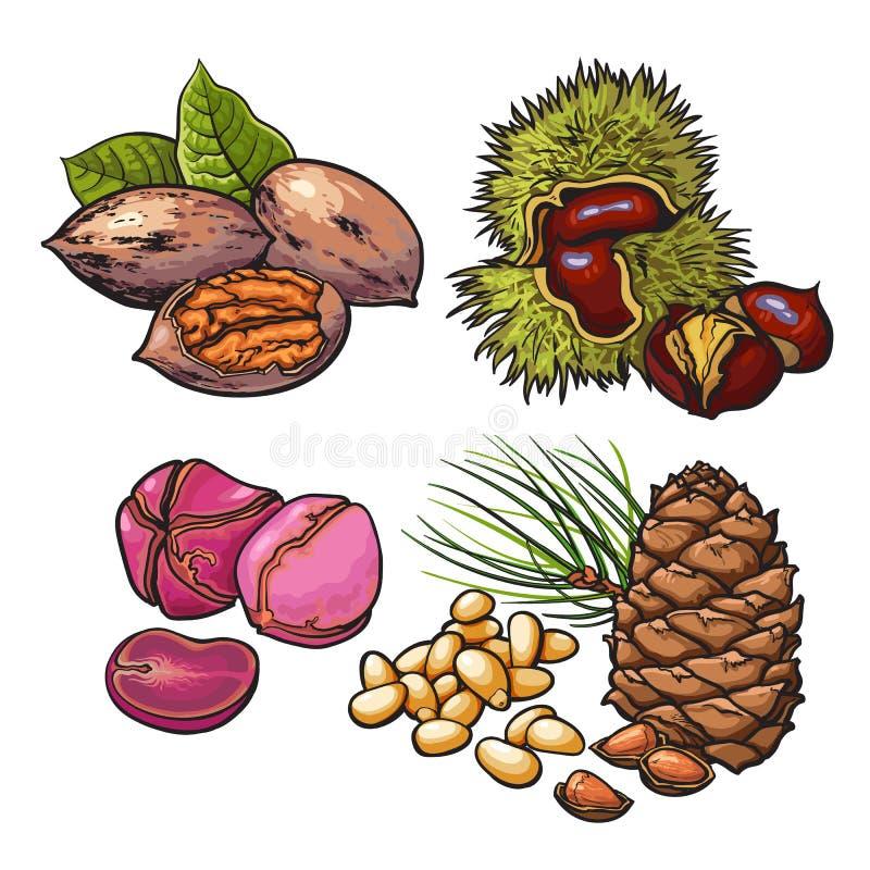 Sammlung Walnüsse, Kastanien, Kiefernnüsse und Erdnüsse lizenzfreie abbildung