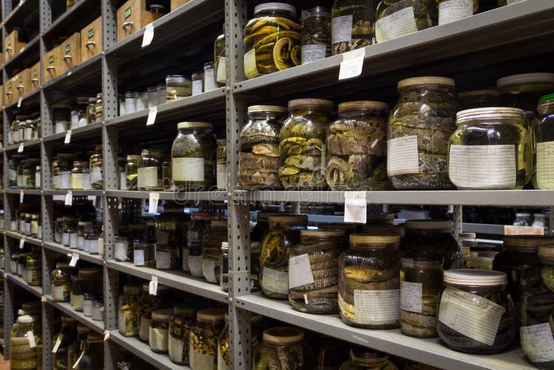 Sammlung Zoologie, Schlangen konserviert für Forschung und Bildung lizenzfreie stockfotografie