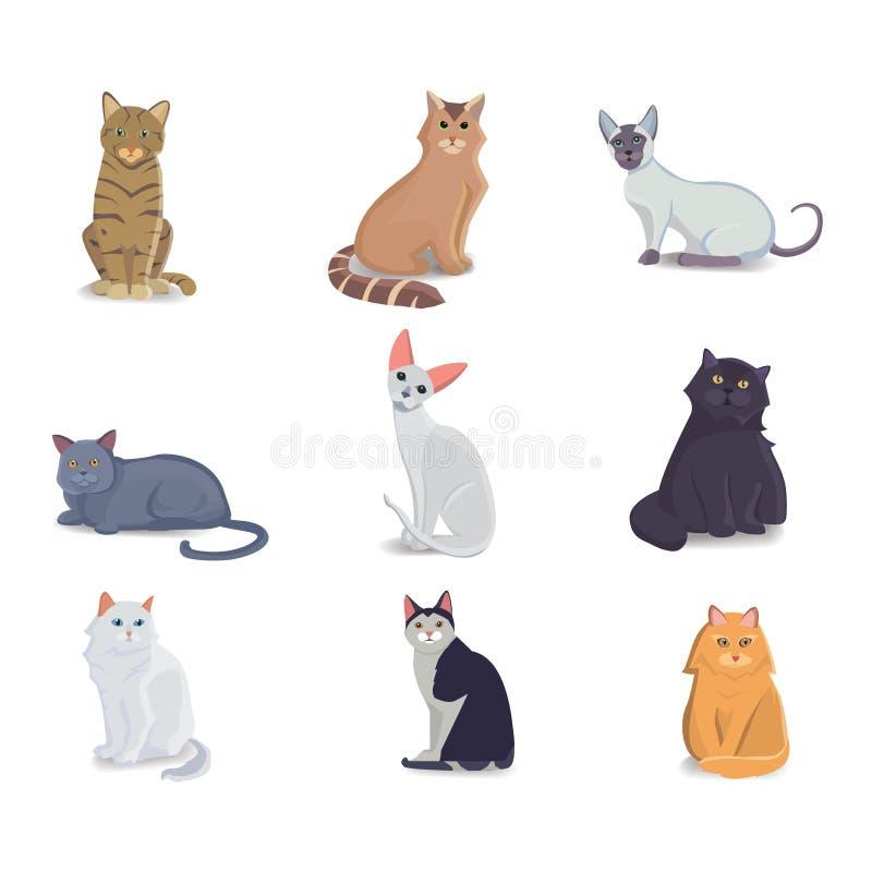 Sammlungs-Katzen der unterschiedlichen Zucht Vektor lokalisierte Katze auf weißem Hintergrund Haupttier oder Haustiere Fanny-Kätz stock abbildung